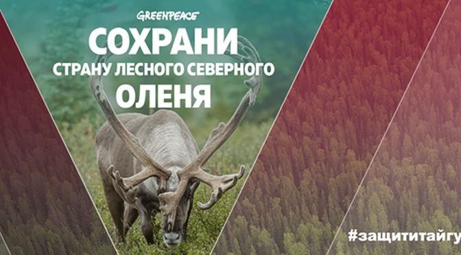 Greenpeace: Сохраните дом северного оленя