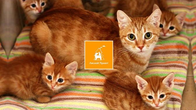 """Сбор на новый дом для кошек """"Лесного приюта"""""""
