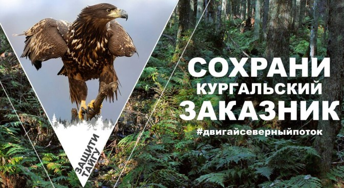 Greenpeace: Защитите Кургальский заказник