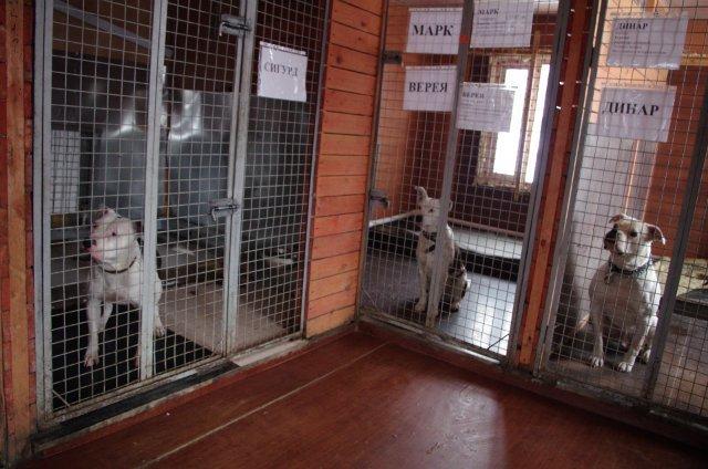 Достроим корпус Шереметьевского приюта для собак
